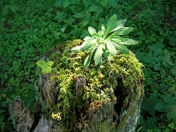 blog20100919_05.jpg