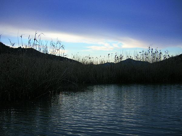 八幡山と葦